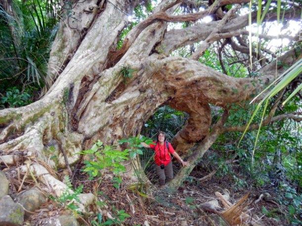 Forêt de Mania - Whangarei