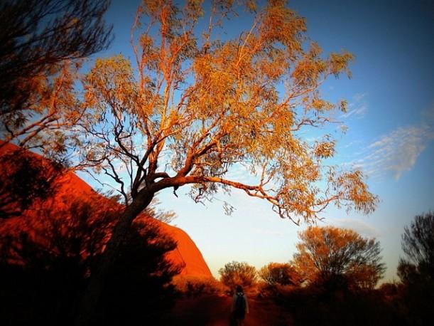 Lever du soleil au travers des arbres à Uluru - Australie