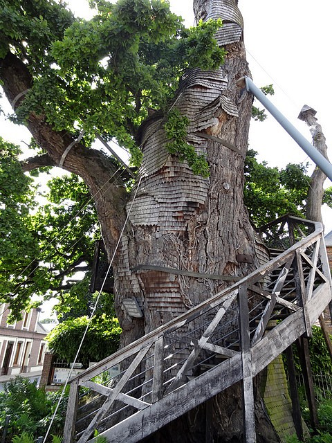 Chêne d'Allouville-Bellefosse (4)