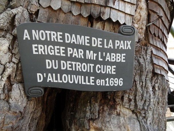 Chêne d'Allouville-Bellefosse (5)